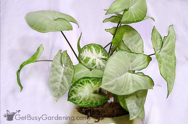 20 Low Light Indoor Plants That Are Easy To Grow Get