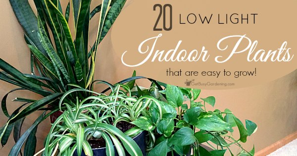 Low Light Indoor Plant List: 20 Houseplants That Are Easy
