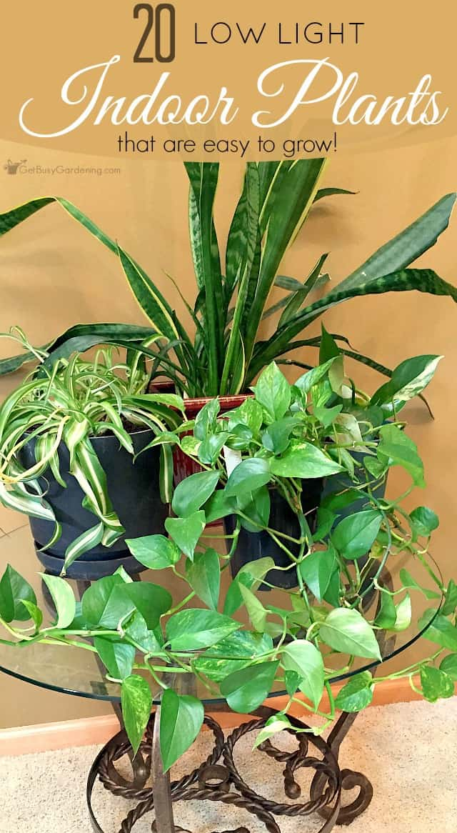 this low light indoor plant list gives tons of options for houseplants that are easy to
