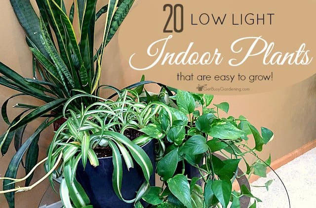 low light indoor plant list