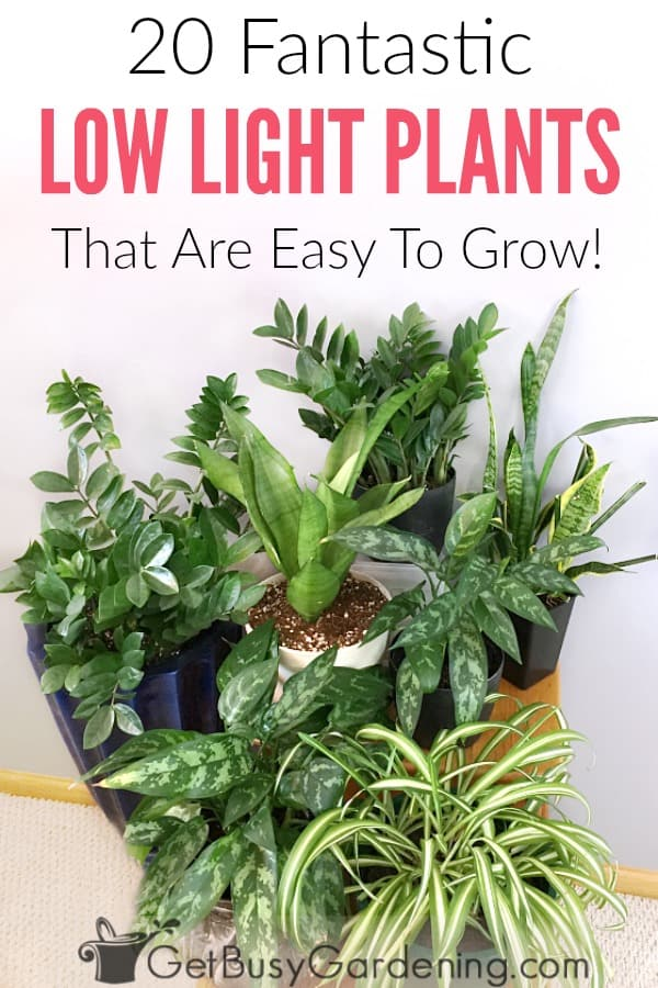 20 Low Light Indoor Plants That Are Easy To Grow - Get Busy Gardening