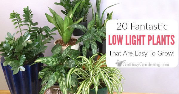 & 20 Low Light Indoor Plants That Are Easy To Grow - Get Busy Gardening