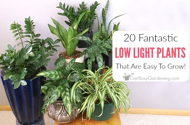 20 low light indoor plants that are easy to grow get for Easy to grow houseplants