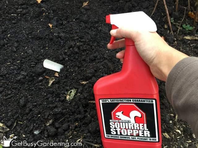 Squirrel Stopper Spray On Garden Bulbs