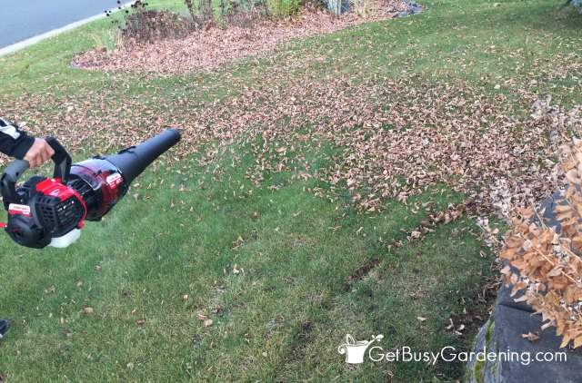 Using my leaf blower to simplify fall cleanup