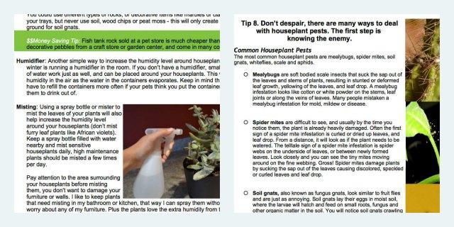 Winter Houseplant Care eBook Excerpt