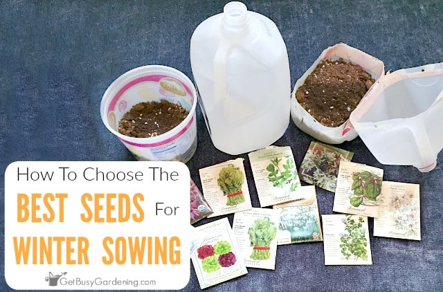 Best Seeds For Winter Sowing: Choosing What Seeds To Winter Sow
