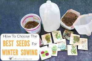 How To Choose The Best Seeds For Winter Sowing