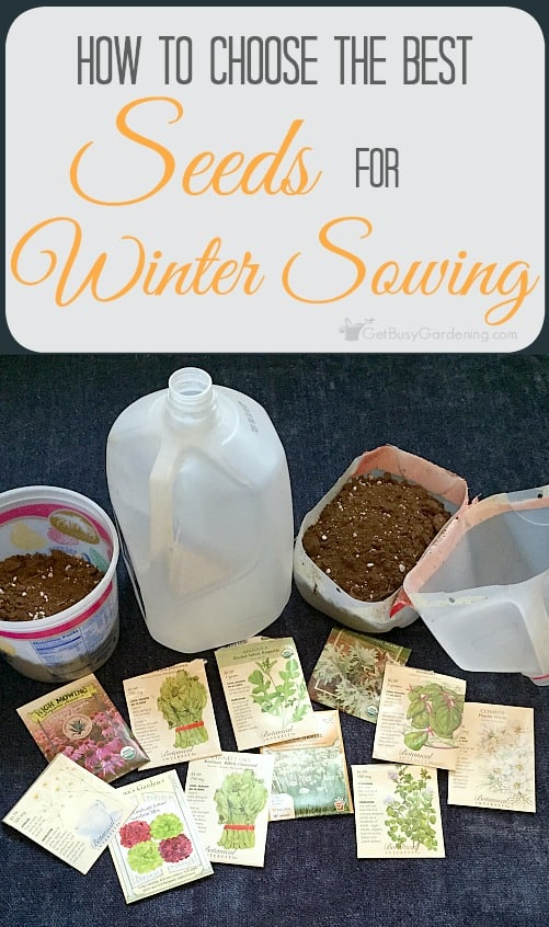 Wondering what seeds to winter sow? Learn keywords to look for when choosing the best seeds for winter sowing. Includes a sample winter sowing seed list.