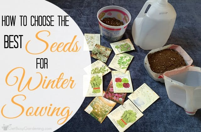 Best seeds for winter sowing