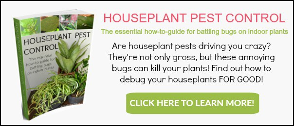 Houseplant-pest-control-banner-ad