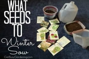 What Seeds To Winter Sow