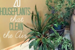 20 Houseplants That Clean The Air