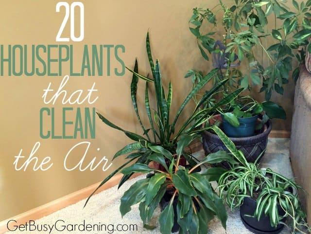 20 Houseplants That Clean The Air
