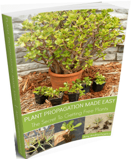 Plant propagation eBook