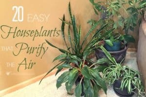 20 Easy Houseplants That Purify The Air In Your Home