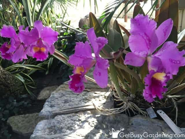 Orchid Houseplant Flowers