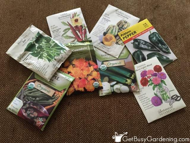 Some Of The Easiest Seeds To Start Indoors