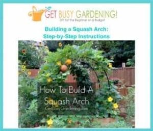 squash Arch Plans