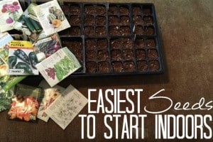 Easiest Seeds To Start Indoors