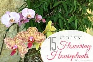 15 Of The Best Flowering Houseplants
