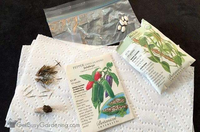 Paper towel germination and baggie test