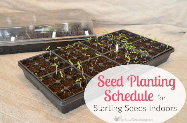 Seed Planting Schedule: When To Start Garden Seeds Indoors