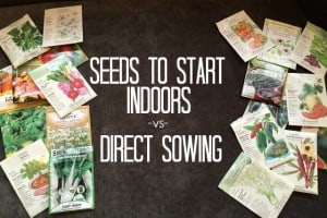 Seeds To Start Indoors -vs- Direct Sowing | GetBusyGardening.com