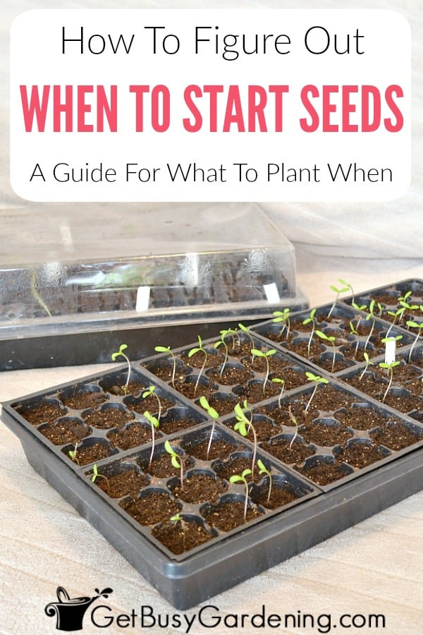 A general guideline for when to plant seeds indoors is 6-8 weeks before last frost, but the best planting dates are different for many seeds. Follow these simple guidelines to figure out when to start seeds indoors, so you know exactly what to plant when, and learn how to create your own custom seed planting schedule.