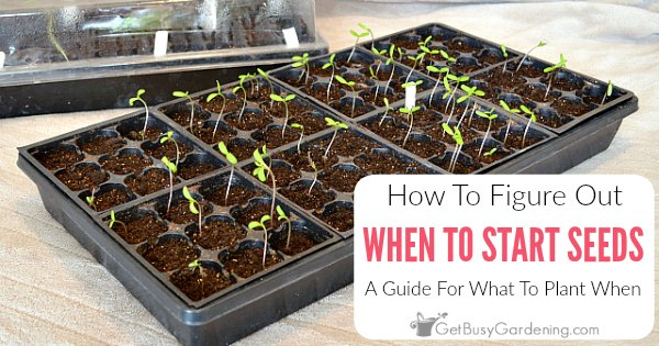 When To Start Seeds Indoors: How To Figure Out What To Plant When
