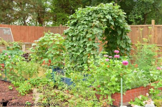 2014 Vegetable Garden August