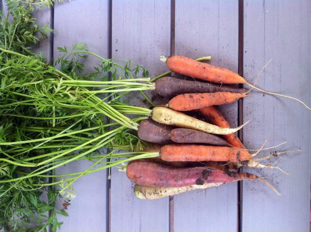 Carrots Grown From Seed