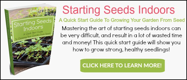 Start Garden Seeds Indoors Starting seeds indoors tips for growing seeds indoors for beginners starting seeds indoors banner ad workwithnaturefo