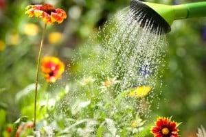 5 Tips for Watering Your Vegetable Garden