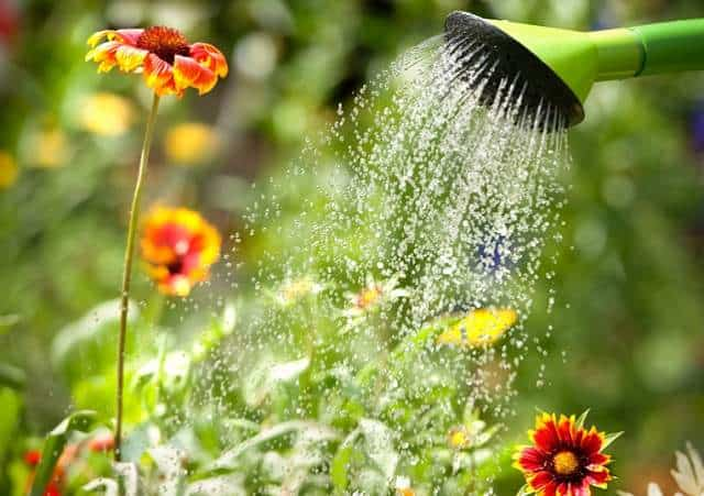 Nice Watering Flowers With A Watering Can