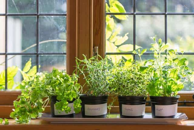 A Little Guide To Successful Indoor Herb Gardening