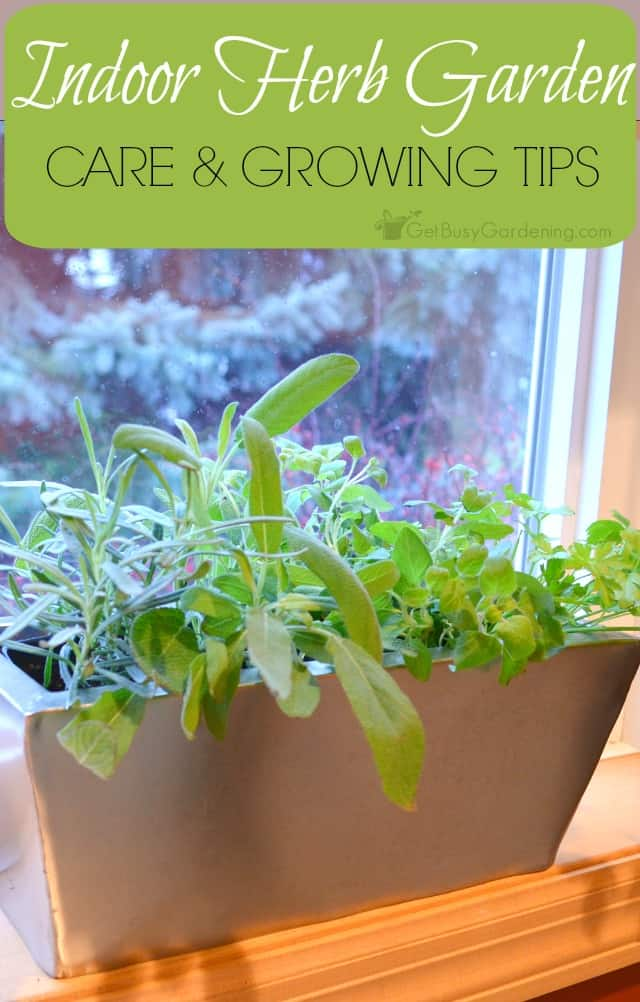 Despite the fact that growing herbs indoors is popular, they can be challenging to maintain. Here's some indoor herb garden tips to help you be successful.