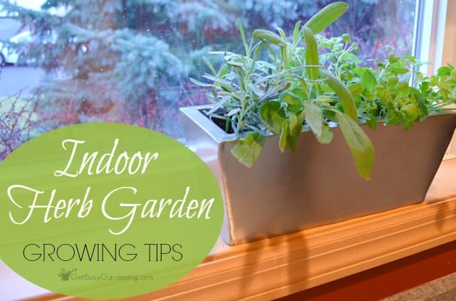 Indoor herb garden tips a guide to successful indoor herb for Indoor gardening methods