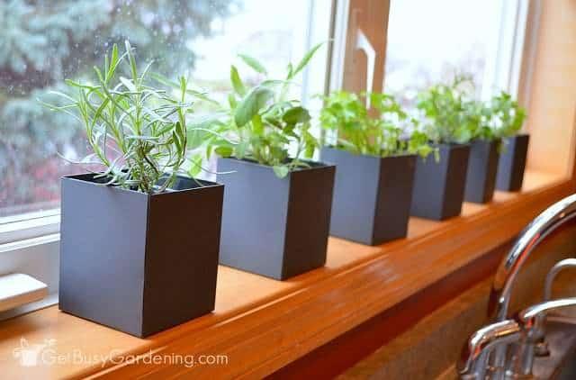 Indoor herbal garden on windowsill