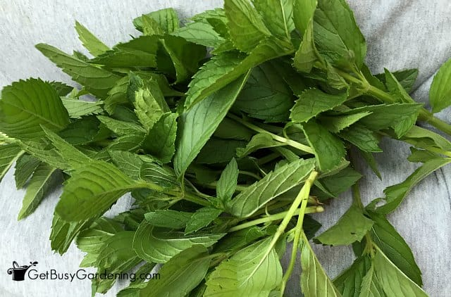 A little guide to successful indoor herb gardening - Herbs that can be grown indoors ...