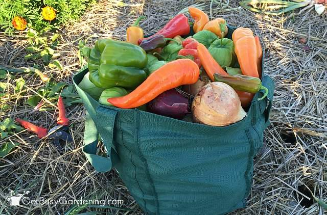 Overflowing Harvesting Bag