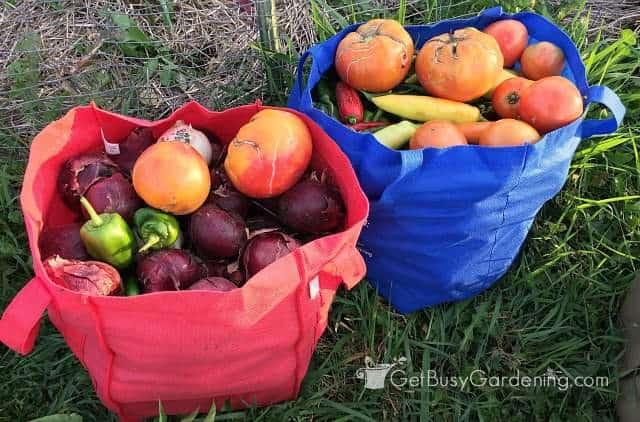 Full Harvesting Bags