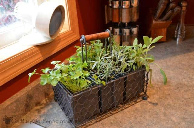 Grow Light For Indoor Kitchen Herb Garden