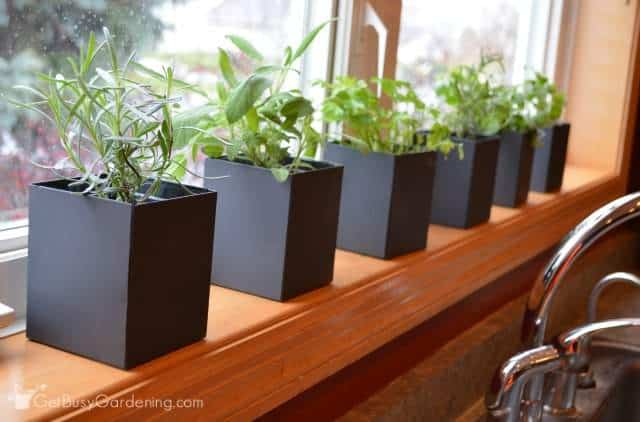 Indoor Kitchen Herb Garden