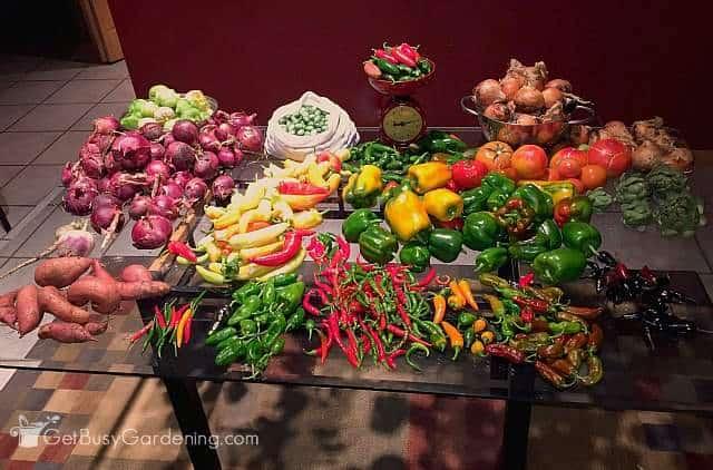 Huge Summer Harvest