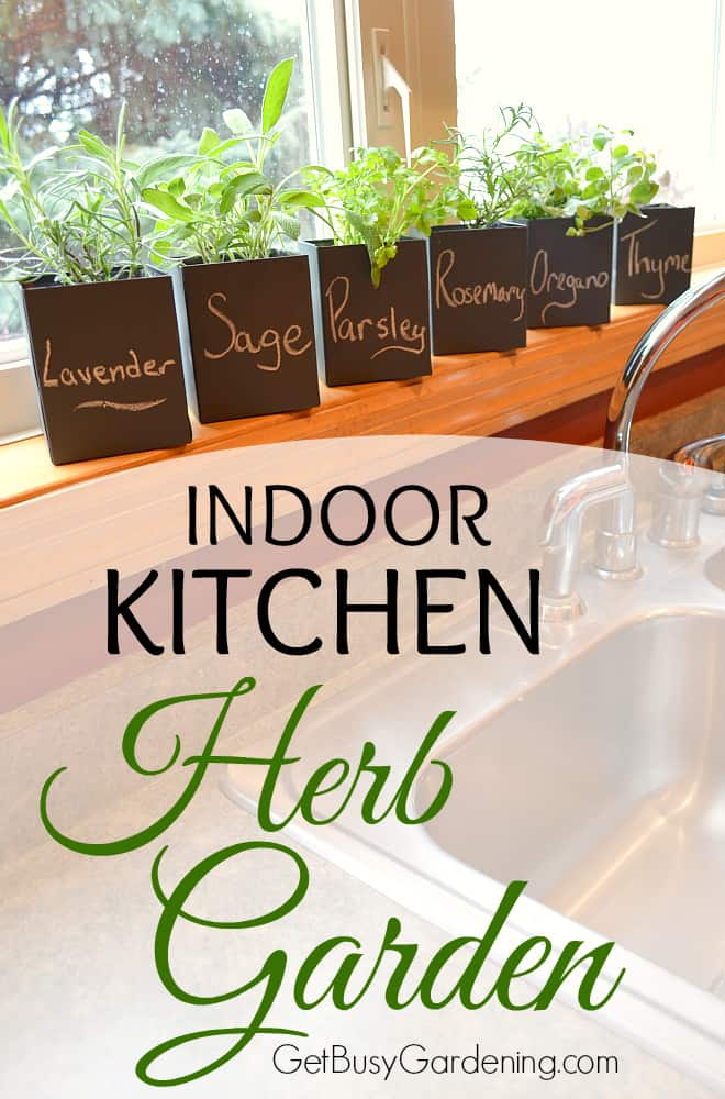 Herbs are easy to grow and can thrive indoors with little effort. An indoor kitchen herb garden is the perfect way to grow herbs year round.