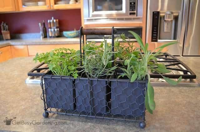 indoor kitchen herb garden caddy