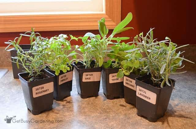 Plants For Indoor Kitchen Herb Garden