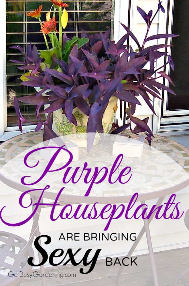 Boring green houseplants are so last year. Add some pazazz to your collection with this list of 17 purple houseplants you definitely need right now.