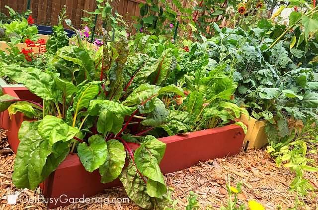My 2015 veggie garden beds